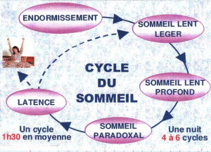 Sommeil-cycle